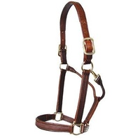 Walsh Stallion Halter