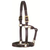 Walsh Leather Lexington Halter